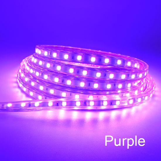 LED Strips  5050 purple
